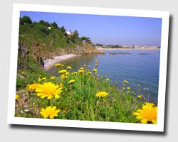image CP argeles_sur_mer